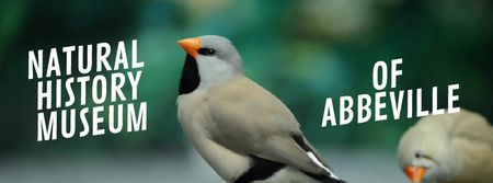 Plantilla de diseño de Cute shaft tailed finch birds Facebook Video cover