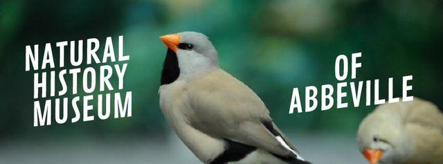 Designvorlage Cute shaft tailed finch birds für Facebook Video cover