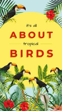 Toucans in tropical forest