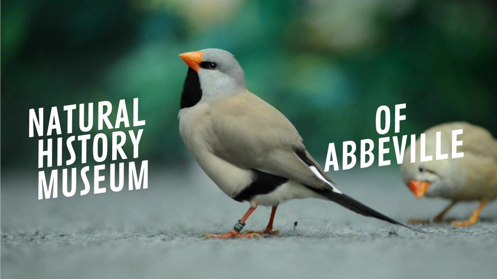 Cute shaft tailed finch birds — Crear un diseño