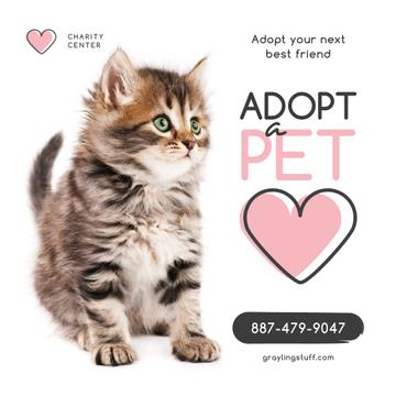 Adoption Center Ad Cute Grey Kitten