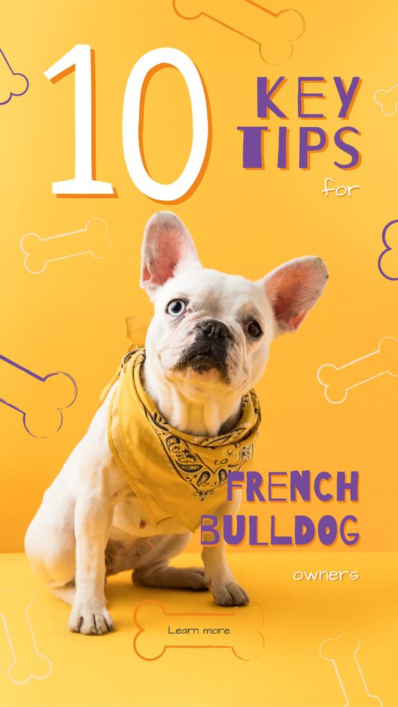 Cute french bulldog Instagram Story Modelo de Design
