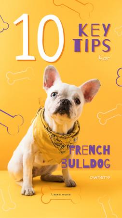 Plantilla de diseño de Cute french bulldog Instagram Story