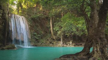 Scenic Waterfall and Lake in Jungle