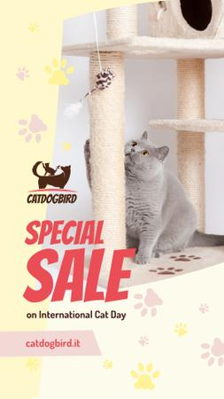 Ontwerpsjabloon van Instagram Story van Cat Day Sale Cute Grey Shorthair Cat Playing