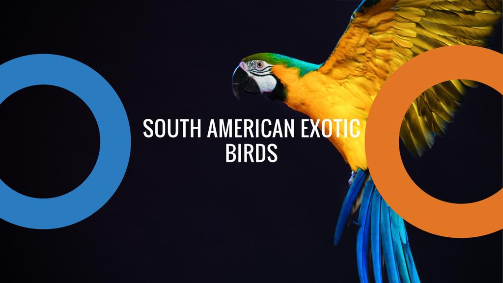 Exotic Birds Shop Ad Flying Parrot | Youtube Channel Art — Modelo de projeto