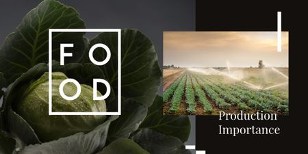 Green cabbage on farm field Image Modelo de Design