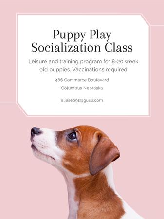 Puppy socialization class with Dog in pink Poster USデザインテンプレート