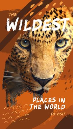 Wild leopard in natural habitat Instagram Story Modelo de Design