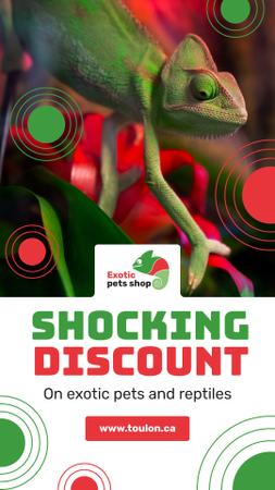 Template di design Pet Shop Offer Green Chameleon Instagram Story