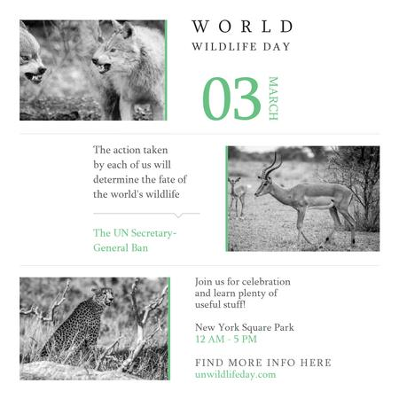 World Wildlife Day Animals in Natural Habitat Instagram AD – шаблон для дизайну