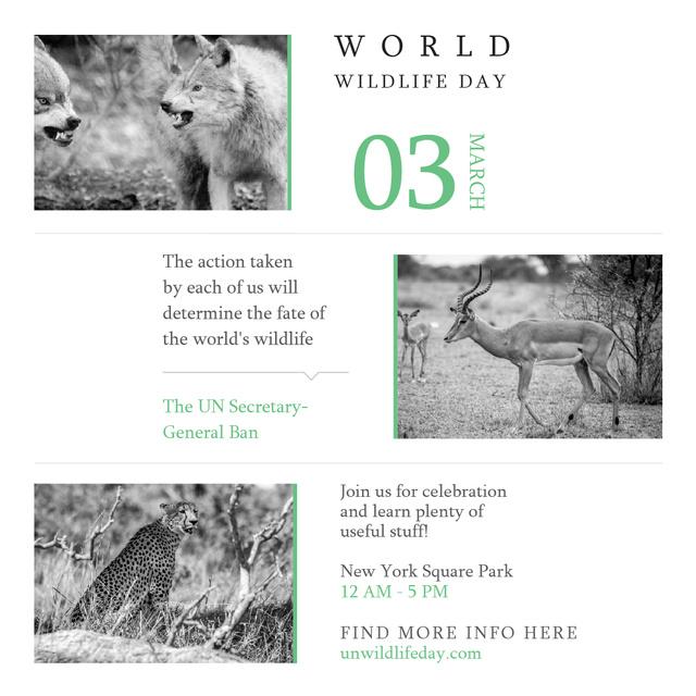 World Wildlife Day Animals in Natural Habitat Instagram AD – шаблон для дизайна