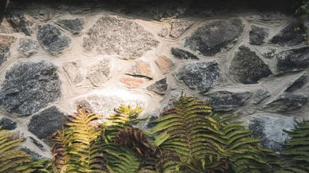 Plantilla de diseño de Stone wall with fern leaves Zoom Background