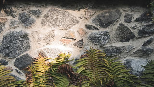 Stone wall with fern leaves Zoom Background Modelo de Design