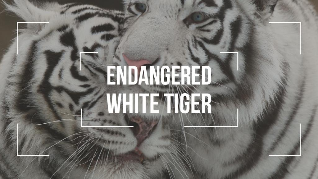 Endangered Animals White Tigers | Youtube Thumbnail Template — Crear un diseño