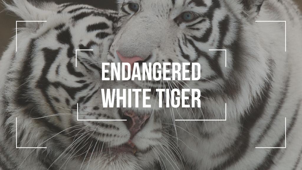 Endangered Animals White Tigers — ein Design erstellen