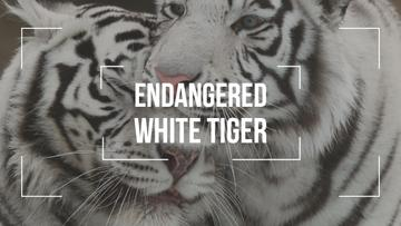 Endangered Animals White Tigers | Youtube Thumbnail Template