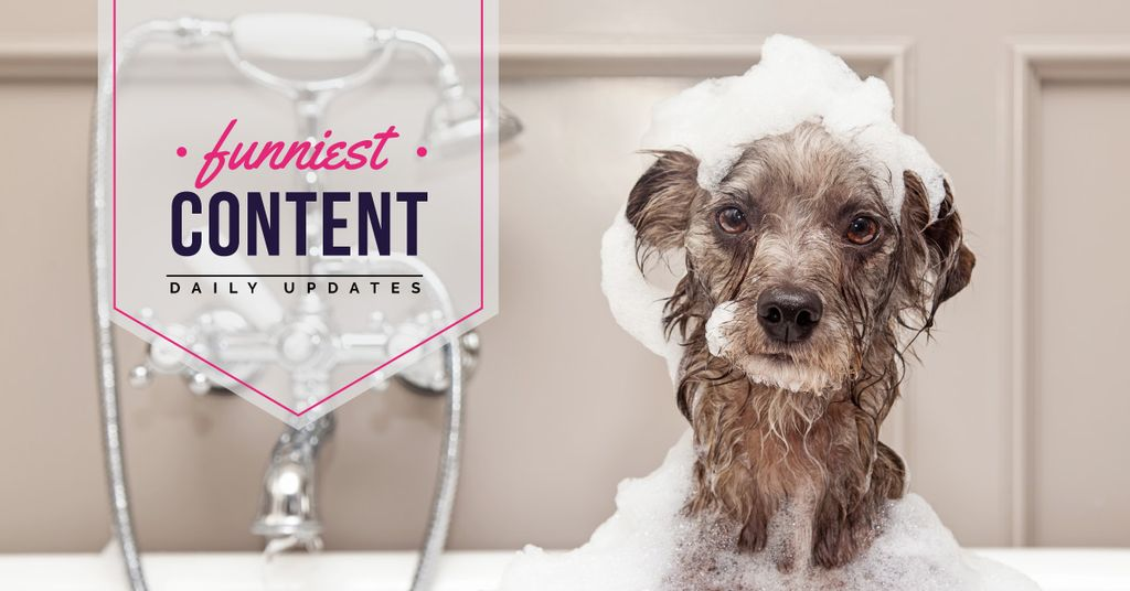 funniest content blog with animals  — Crear un diseño