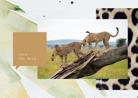 Ontwerpsjabloon van Postcard van Wild cheetah in natural habitat