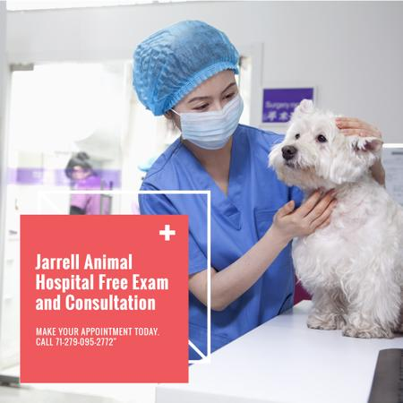 Veterinarian examining Dog in Animal Hospital Instagramデザインテンプレート