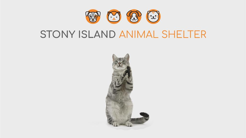 Animal Shelter Ad Cute Grey Cat Playing | Full Hd Video Template — Create a Design