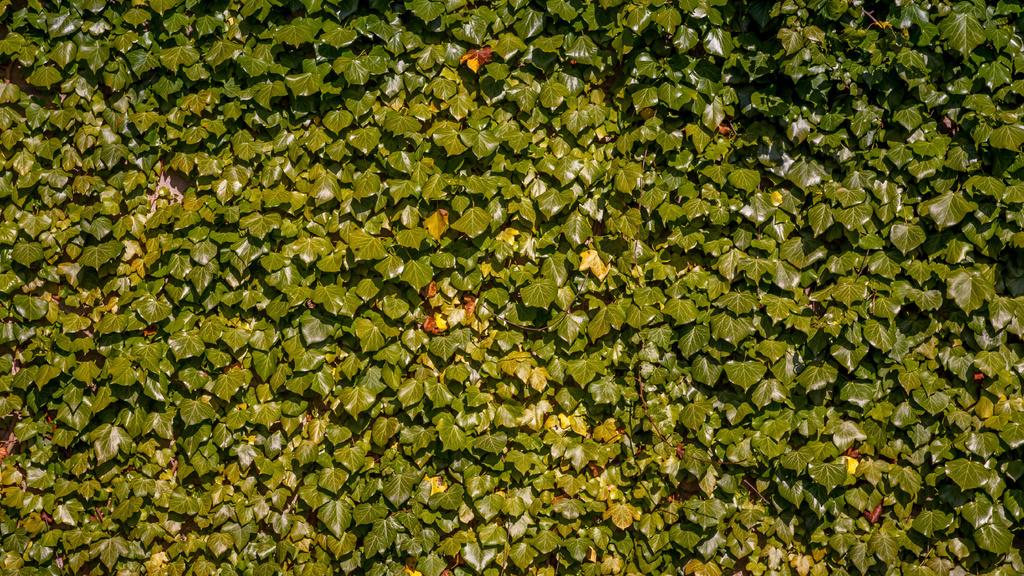 Lush weaving ivy — Создать дизайн