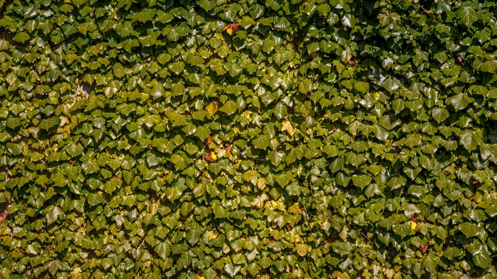 Lush weaving ivy — Create a Design