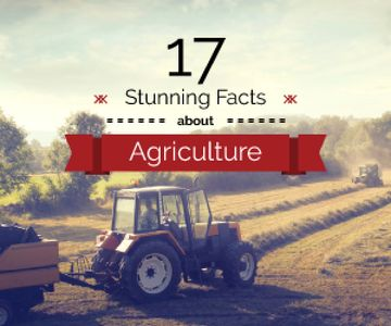 Agriculture Facts Tractor Working in Field | Medium Rectangle Template