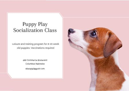 Puppy play socialization class Postcard – шаблон для дизайну