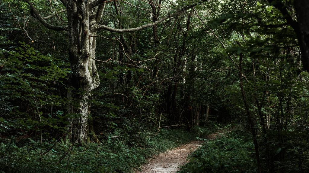 Footpath in the wild Forest — Crear un diseño