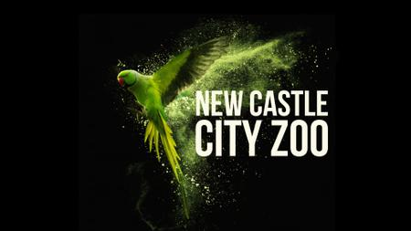 Modèle de visuel Flying green parrot - Full HD video
