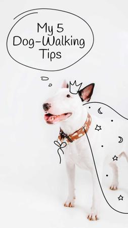 Designvorlage Bull Terrier for Dog Walking tips für Instagram Story