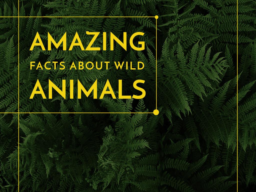 Amazing facts about wild animals — Crear un diseño