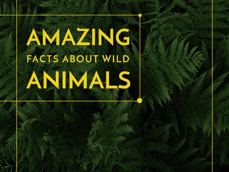 Plantilla de diseño de Amazing facts about wild animals Presentation