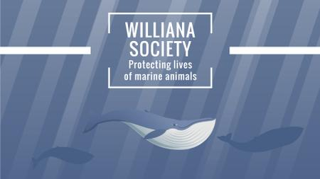 Plantilla de diseño de Marine Life Society Whales Swimming Underwater Full HD video