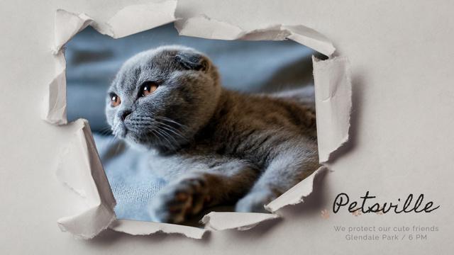 Pet Care Scottish Fold Cat in Torn Paper Frame Full HD video Modelo de Design