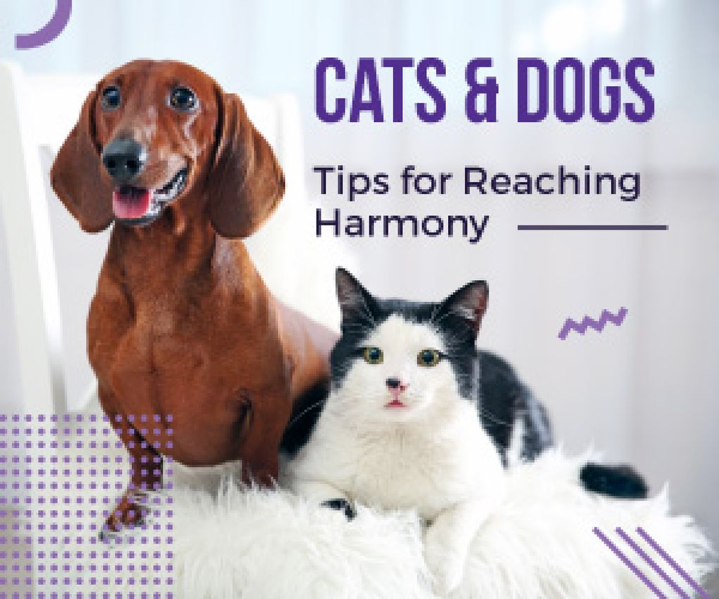 Tips for reaching harmony between cat and dog poster — ein Design erstellen