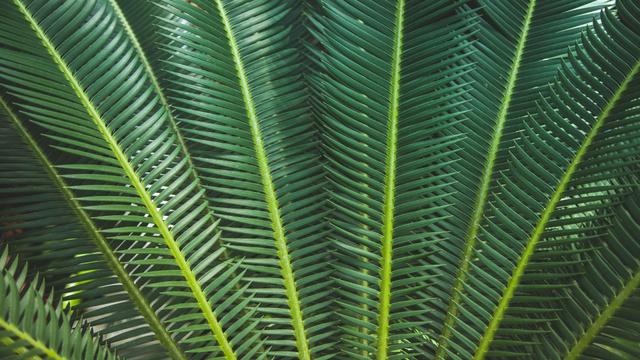 Plantilla de diseño de Tropical green branches Zoom Background