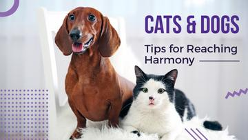 Cats and dogs tips for reaching harmony