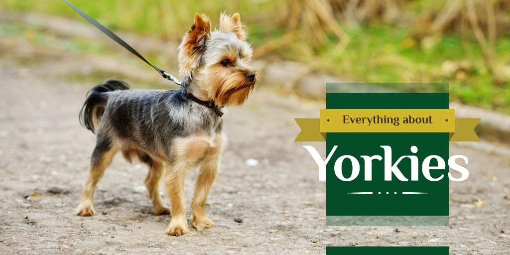 Yorkshire Terrier Dog on a Walk | Twitter Post Template — Create a Design