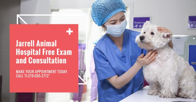 Ontwerpsjabloon van Facebook AD van Veterinarian examines a Dog