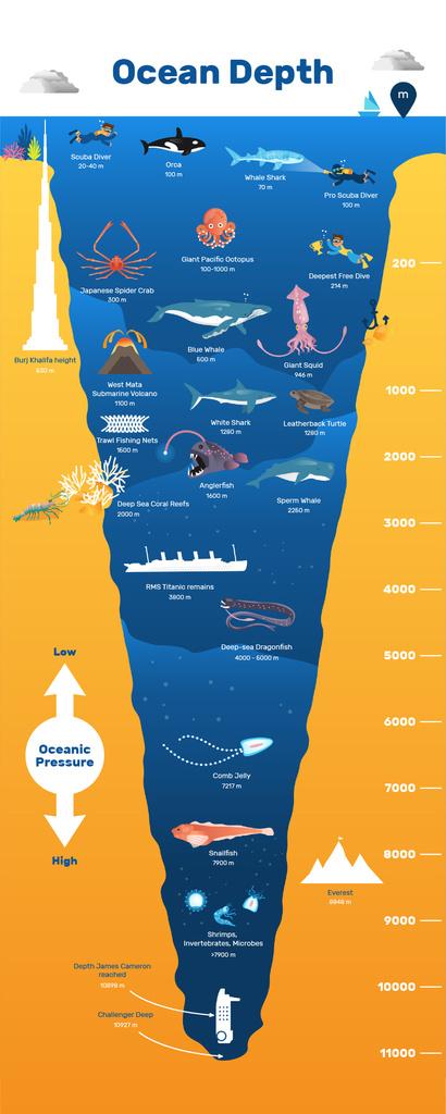 Education infographics about Ocean Depth — Modelo de projeto