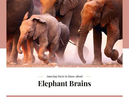 Plantilla de diseño de Facts about Elephants Presentation