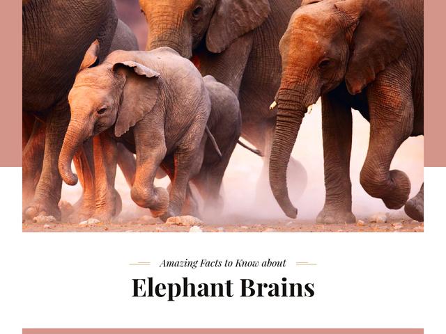 Modèle de visuel Facts about Elephants - Presentation