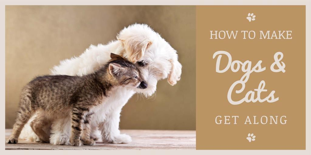 Pets Behavior Cute Dog and Cat in Brown | Twitter Post Template — Maak een ontwerp