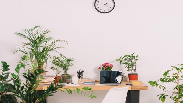 Plantilla de diseño de Cozy Home Workplace with vases of Flowers Zoom Background
