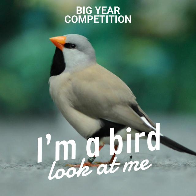 Designvorlage Cute shaft tailed finch bird für Animated Post