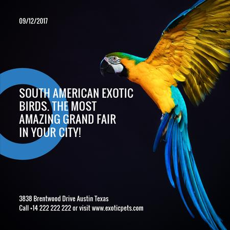 Modèle de visuel Exotic Birds fair Blue Macaw Parrot - Instagram AD