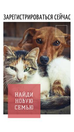 Pet Adoption Ad with Cute Dog and Cat Instagram Story – шаблон для дизайна