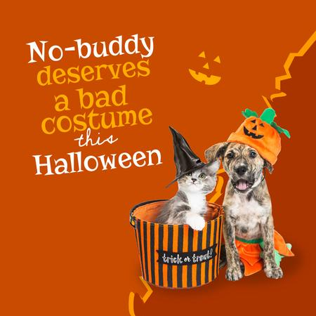 Funny Animals in Halloween Costumes Instagram – шаблон для дизайну